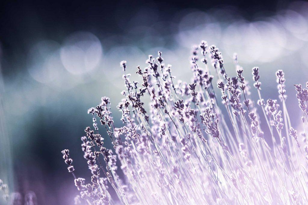 Toxic-Load_lavendar